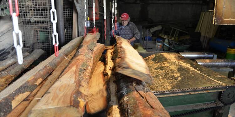 Forêt: le prix du bois progresse en 2016, tiré par le chêne et le pin Douglas