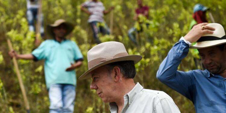 Colombie: le président Santos lance le plan de substitution de la coca