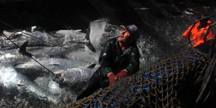 Pêche illégale du thon: 48 entreprises signent un pacte
