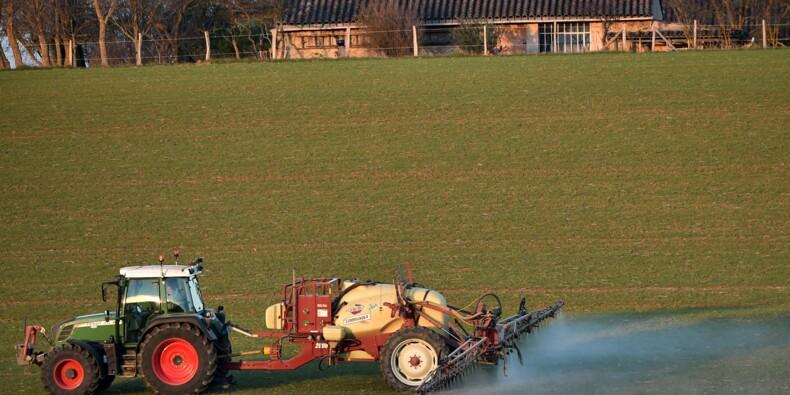 Perturbateurs endocriniens: le gouvernement publie deux listes de pesticides