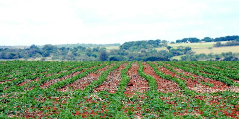 Brésil: l'agriculture bouée temporaire de l'économie