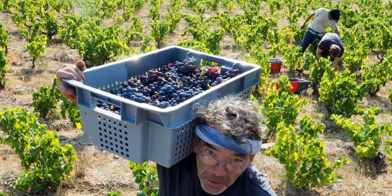 Vin : la qualité sera au rendez-vous pour le millésime 2017, mais pas la quantité
