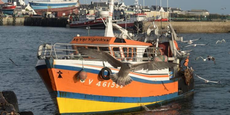 Pourquoi les prix des poissons s'envolent et le saumon manque