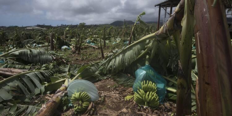 Ouragan Maria: les bananiers de Guadeloupe et de Martinique mis à terre