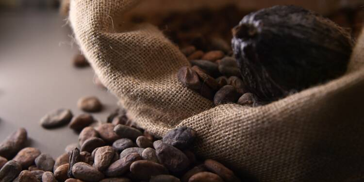 Chocolat : qu'est-ce que le cacao durable ?