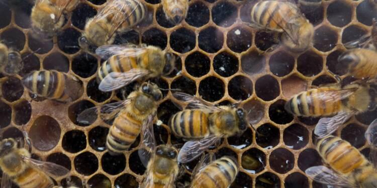 Des pesticides néfastes aux abeilles présents dans 75% du miel mondial