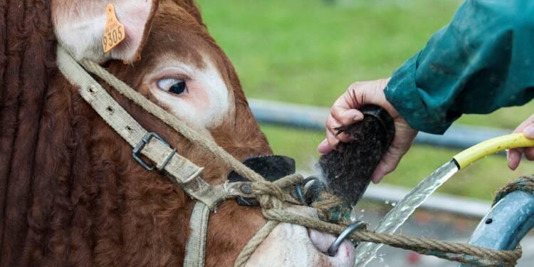 Au Sommet de l'Élevage, végans et éleveurs face à face
