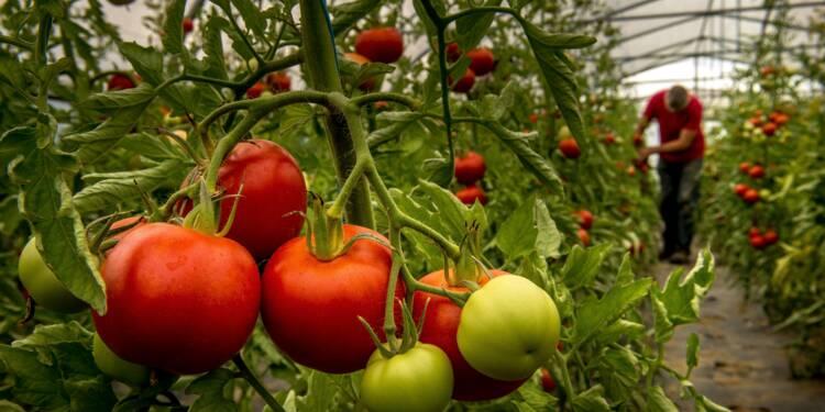 Hausse du revenu moyen des agriculteurs en 2016