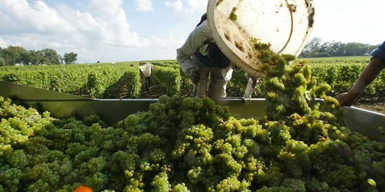 """Vin: en Bordelais, récolte 2017 historiquement basse mais millésime """"de qualité"""""""