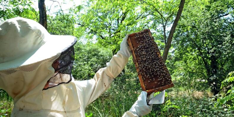 """Abeilles: les apiculteurs inquiets d'un """"nouveau néonicotinoïde"""""""