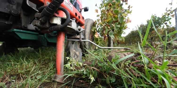 Des vignerons bordelais tentent de chasser le glyphosate de leurs vignes