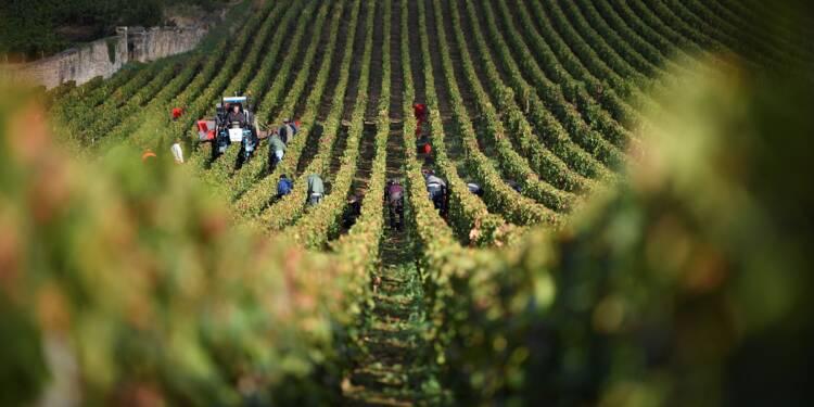 """La Bourgogne inquiète de l'arrivée de """"vins de France"""""""