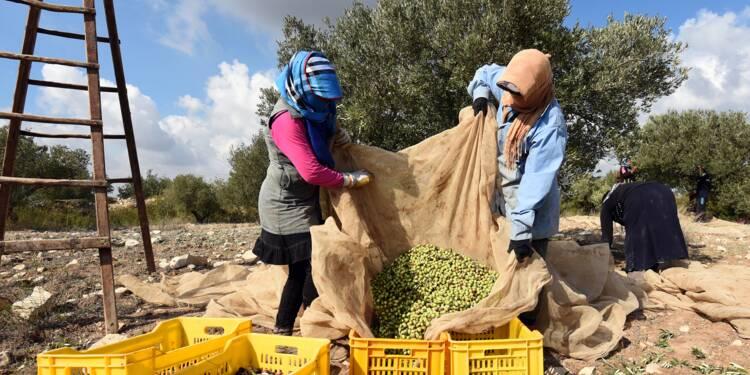 """La Tunisie s'attend à une production """"exceptionnelle"""" d'huile d'olive"""