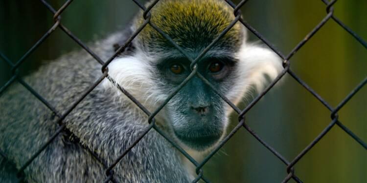 Au Caire, le plus vieux zoo d'Afrique fait grise mine