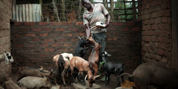 Centrafrique: le retour à la terre pour faire oublier les armes