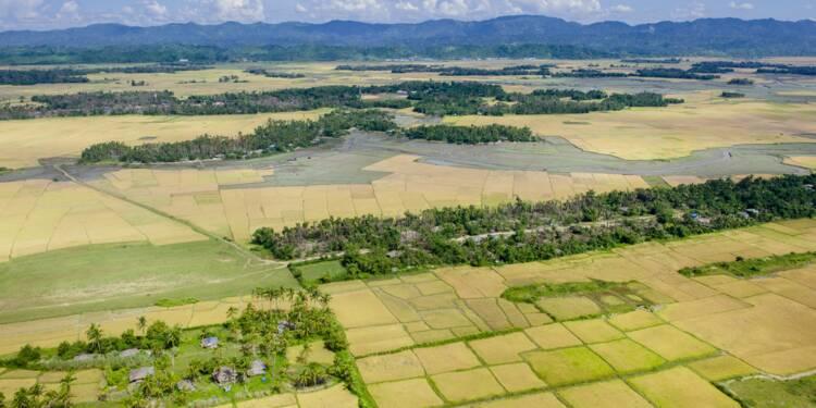 """Dans le """"no man's land"""" rohingya en Birmanie, des rizières pourrissent"""