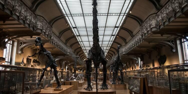 Rénover la galerie de paléontologie: une impérieuse nécessité selon le Muséum