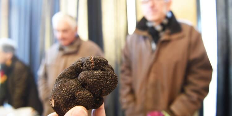 Truffes: quantité et qualité au rendez-vous du premier marché du Périgord