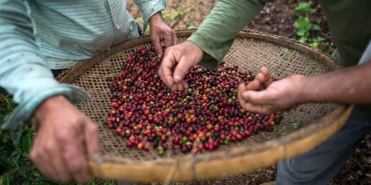 """Brésil: le """"café de spécialité"""", un marché prometteur"""