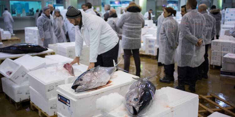 La baisse de la production de poisson issue de la pêche se poursuit