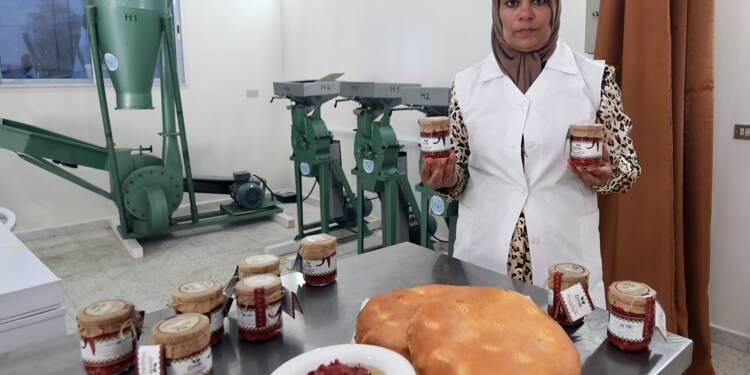 En Tunisie, une harissa traditionnelle donne des ailes à des agricultrices