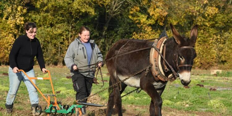Dans le Lot-et-Garonne, pas de bonnet d'âne à l'école des bourricots