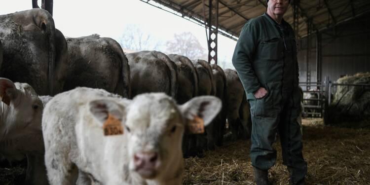 Face aux difficultés, des agriculteurs brisent le silence dans un film