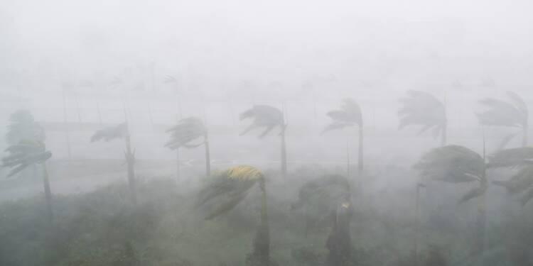 Entre ouragan et maladie, l'orange de Floride pressée de toutes parts