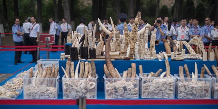 Le commerce de l'ivoire totalement interdit en Chine