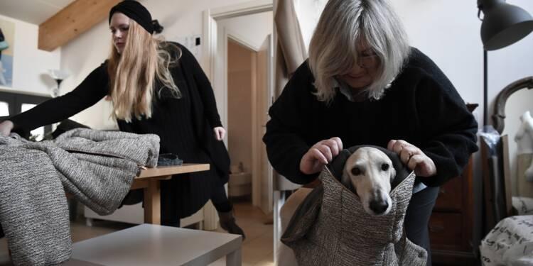 Milan, capitale de l'élégance également pour les... chiens