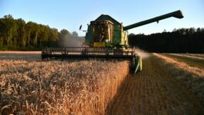 A l'export, le blé français pris en étau entre la Russie et l'Argentine