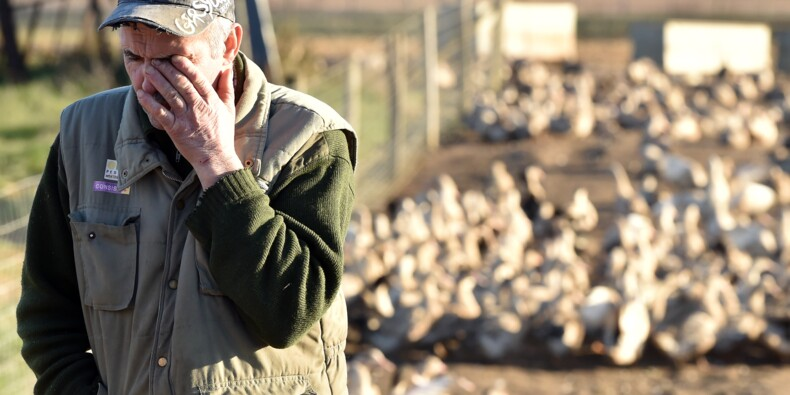 Grippe aviaire: feu vert de l'UE à une compensation pour les éleveurs français