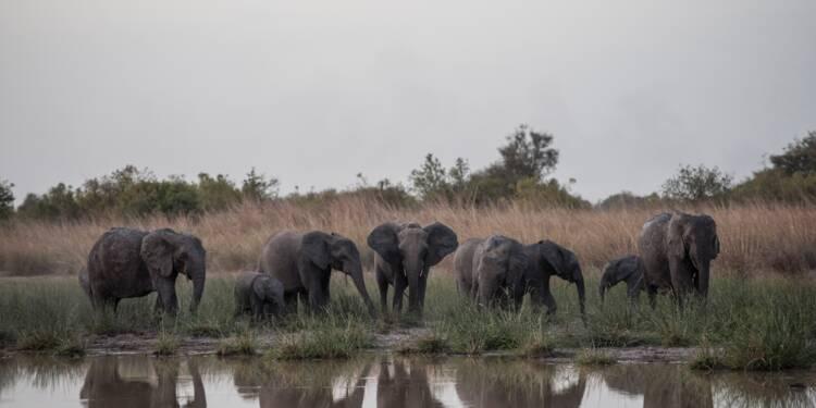 Au Bénin, le parc de la Pendjari se rêve en sanctuaire pour les éléphants d'Afrique de l'Ouest