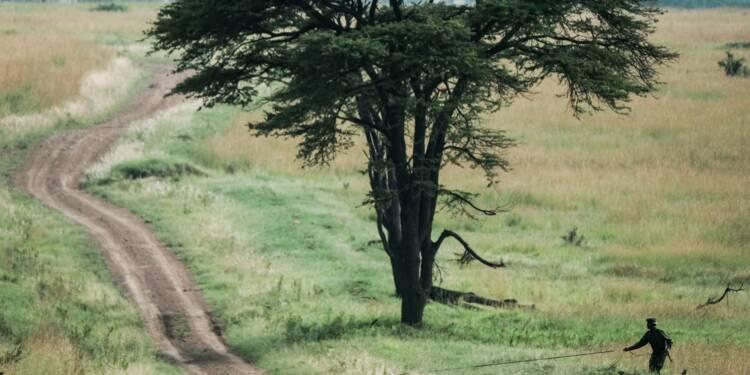 Braconnage: dans la savane kényane, le chien est le meilleur ami des animaux