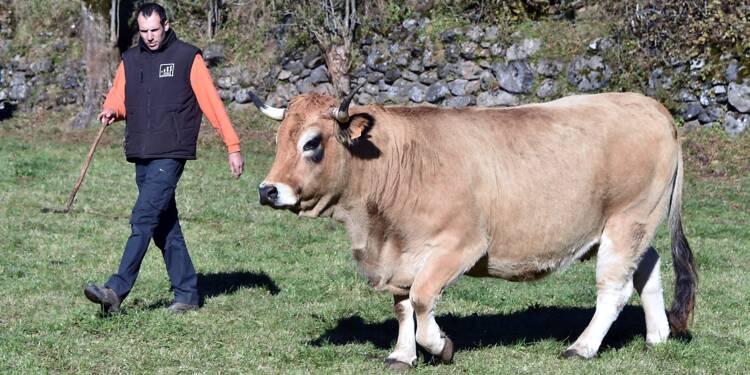 Thibault Dijols, un éleveur des hauts plateaux en transhumance à Paris