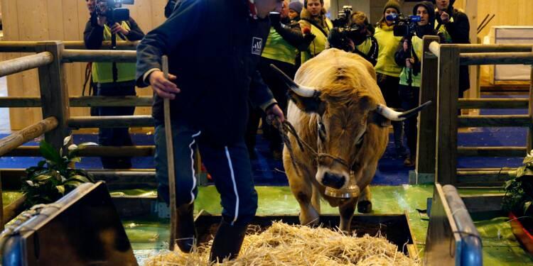 Egérie du salon de l'Agriculture, la vache Haute à Paris