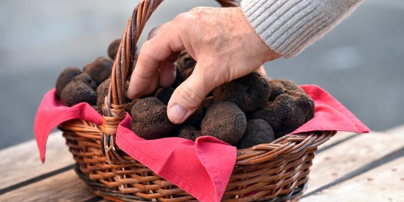 La truffe, une culture capricieuse, exigeante, mais en expansion
