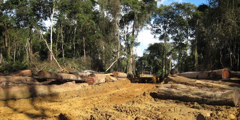 Bois tropicaux: dépôt de bilan du groupe Rougier, très implanté en Afrique