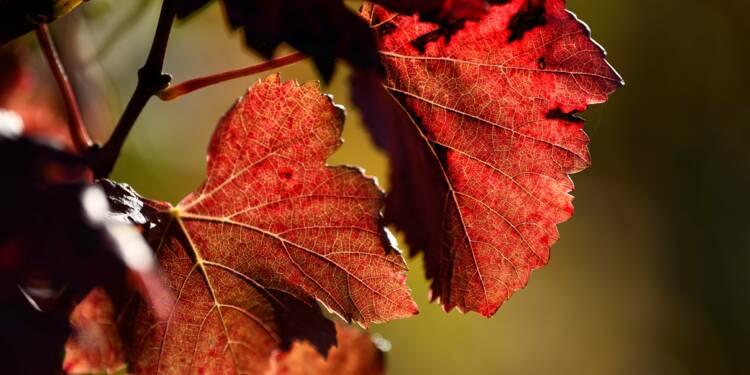 Exportations de vin: les rosés de Provence voient la vie en rose