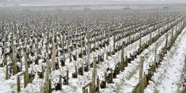 Les vins de Bordeaux à la peine en France en 2017