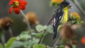 """Le monde évalue l'ampleur de la """"crise"""" de la biodiversité"""