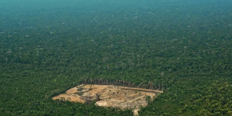 Bois exotique: trafic illégal et déforestation en Amazonie