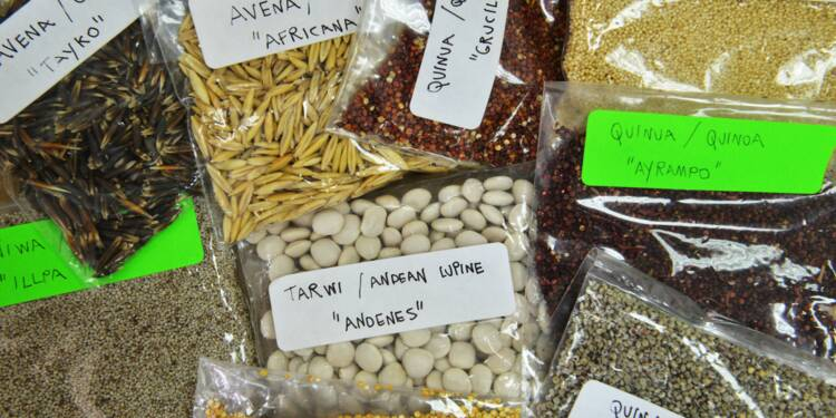 Les Andes, réserve de superaliments menacée par la surproduction