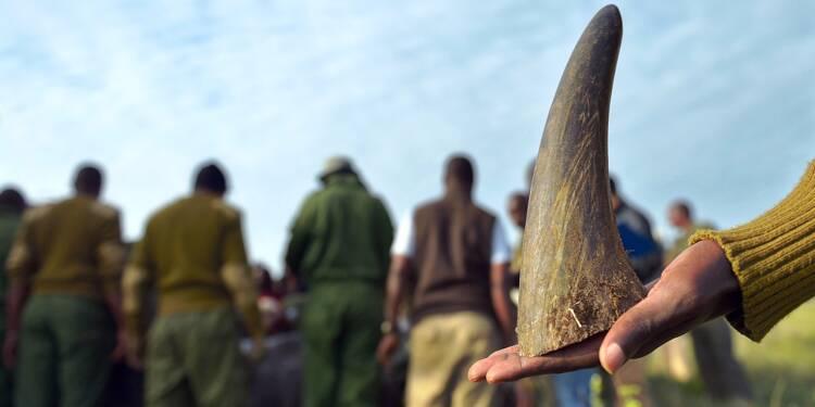 Ces animaux qui paient le prix des croyances et superstitions