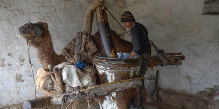 Du sésame et un chameau: une huile précieuse coule à Mazar-i-Sharif
