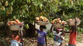 Cacao: accord entre la Côte d'Ivoire et le Ghana