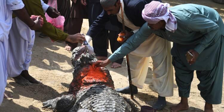 Les crocodiles, gardiens du passé perdu des Africains du Pakistan