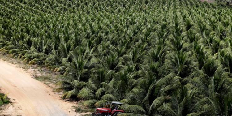 La soif d'eau de coco stimule la production brésilienne
