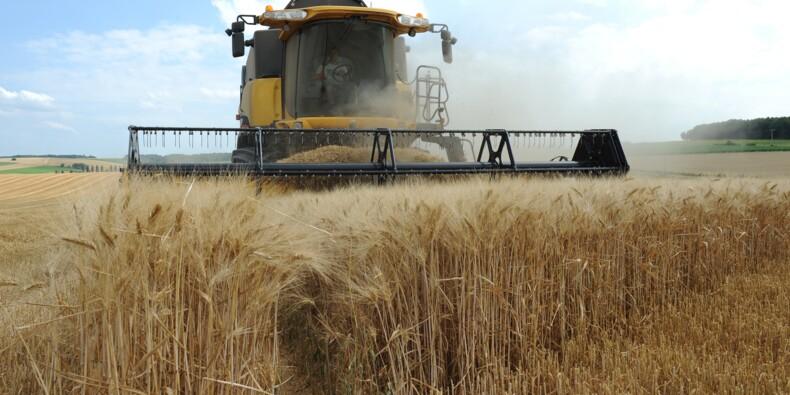 Exportations de blé: la France peine à reconquérir l'Afrique