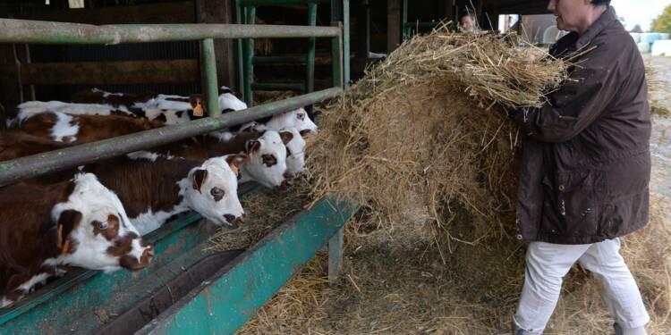 Retraite : les pensions minuscules des agriculteurs